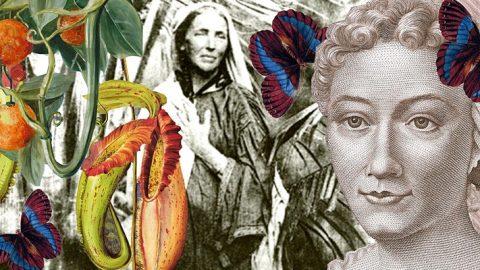 Image for: Lezione di Arte Botanica al Femminile, on line da Londra